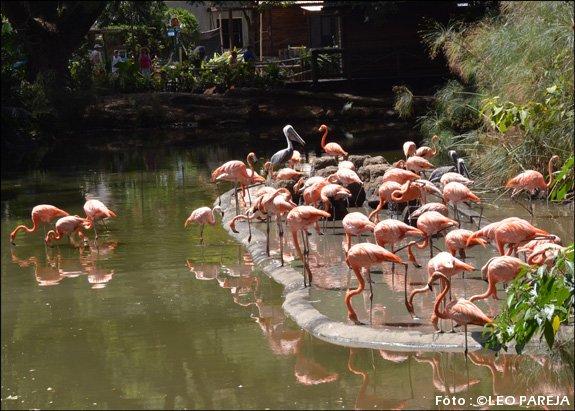 Zoológico de Cali con atracciones para todos los públicos