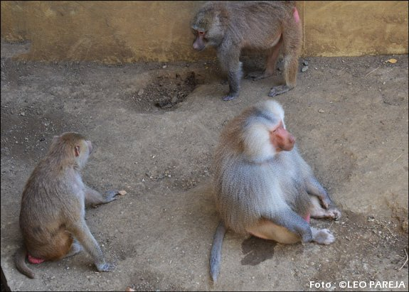 Cali-Zoo-10-