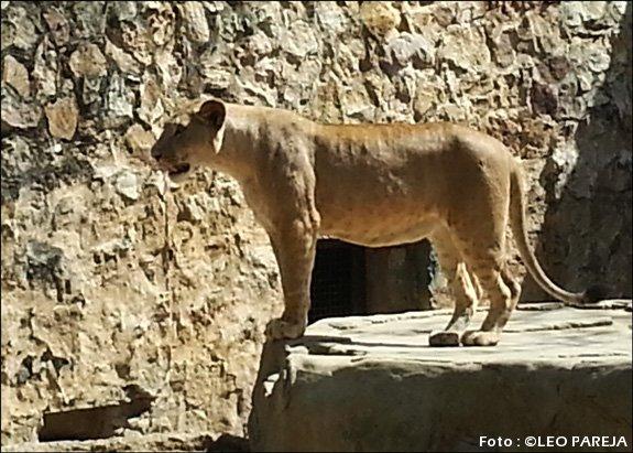 Cali-Zoo-13-