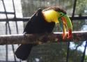 Cali-Zoo-05-