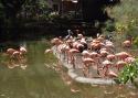 Cali-Zoo-07-