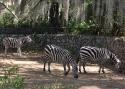Cali-Zoo-08-