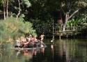 Cali-Zoo-11-