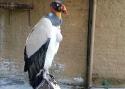 Cali-Zoo-12-