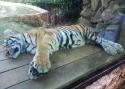 Cali-Zoo-14-
